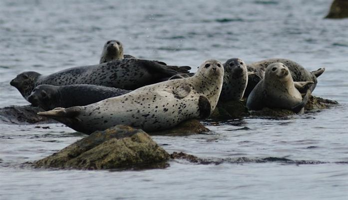 Тюлени. Автор24 — интернет-биржа студенческих работ